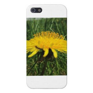 Dandelion Case For iPhone 5/5S