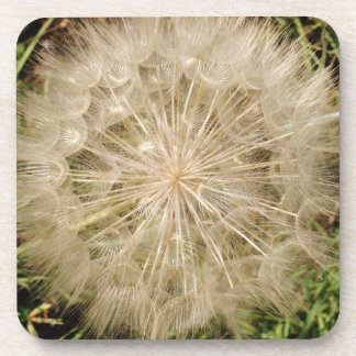 Dandelion Clock Close-Up Coaster