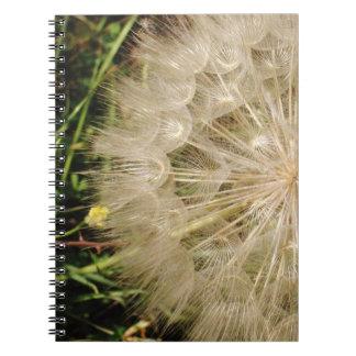 Dandelion Clock Close-Up Notebooks