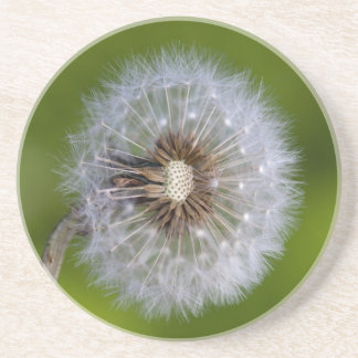 Dandelion Clock Drink Coasters