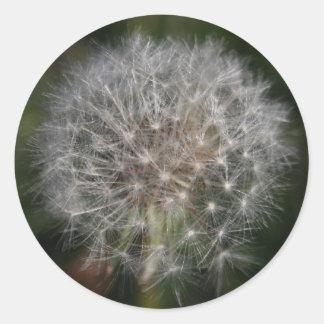 Dandelion Clock Flower Stickers