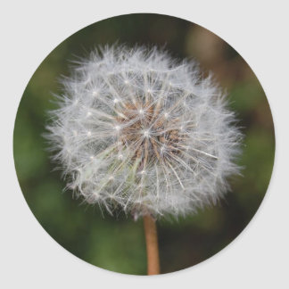 Dandelion Clock / Fluffy Parachutes Classic Round Sticker