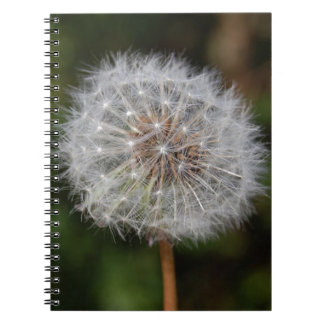 Dandelion Clock / Fluffy Parachutes Notebooks