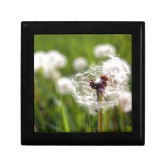 Dandelion clock small square gift box