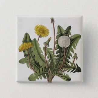 Dandelion (colour engraving) 15 cm square badge