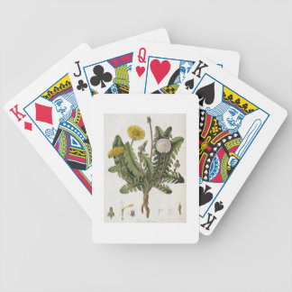 Dandelion (colour engraving) bicycle playing cards