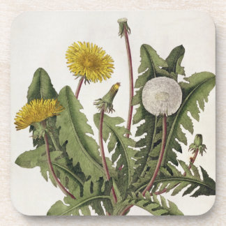 Dandelion (colour engraving) coaster