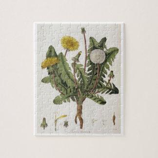 Dandelion (colour engraving) jigsaw puzzle