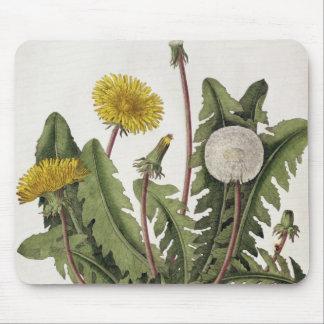Dandelion (colour engraving) mouse mat