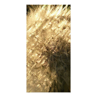 Dandelion Custom Photo Card