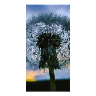 Dandelion Customised Photo Card