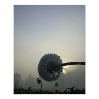 Dandelion Dawn Poster