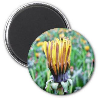Dandelion Flower Almost In Bloom 6 Cm Round Magnet