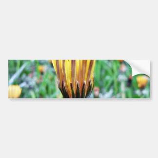 Dandelion Flower Almost In Bloom Bumper Stickers