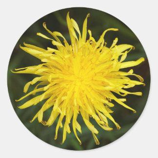 Dandelion Flower Classic Round Sticker