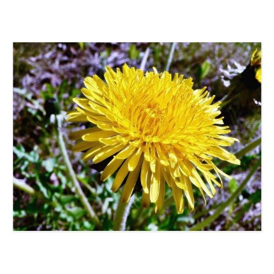 Dandelion Flower In Grass Postcard