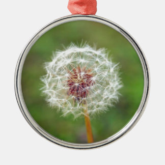 Dandelion flower Silver-Colored round decoration