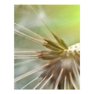 Dandelion Flyers