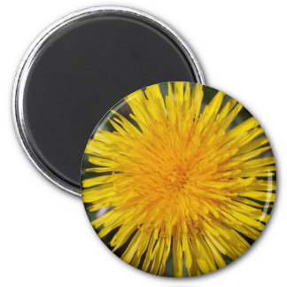 Dandelion Fridge Magnet