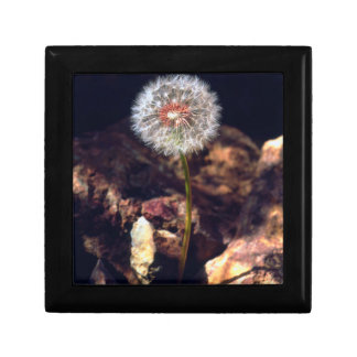 Dandelion Gift Box