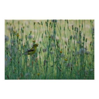 Dandelion Goldfinch Print