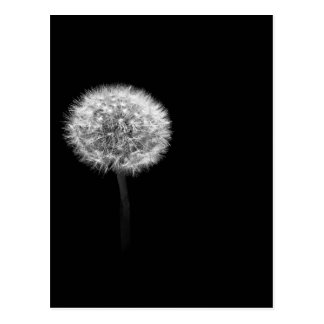 Dandelion Head Postcard