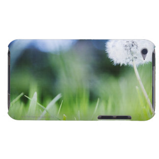 Dandelion in meadow barely there iPod covers