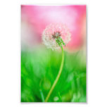 Dandelion in Spring Photograph