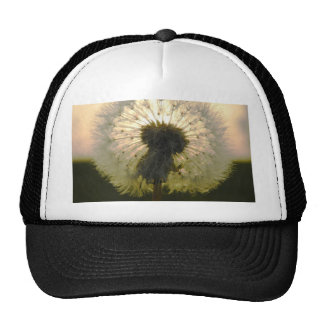 dandelion in the sun cap