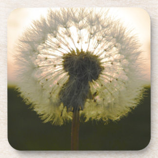 dandelion in the sun coaster