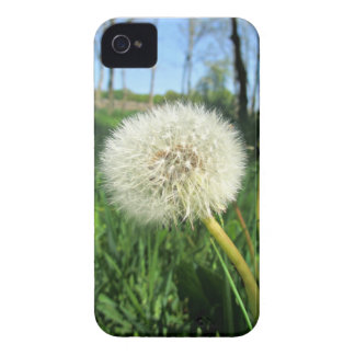 dandelion iPhone 4 cover