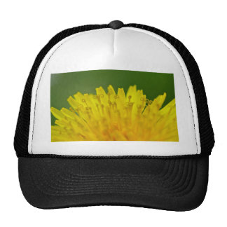 Dandelion, Löwenzahn, Pusteblume Hat