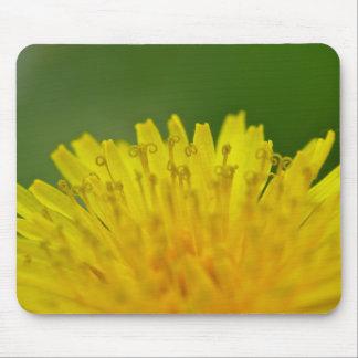 Dandelion, Löwenzahn, Pusteblume Mouse Pad