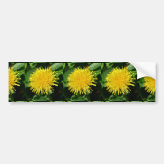 Dandelion Nature, Photo 002 Bumper Sticker