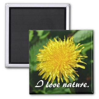 Dandelion Nature, Photo Square Magnet