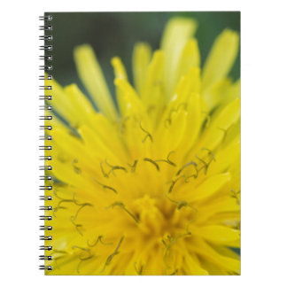dandelion notebooks