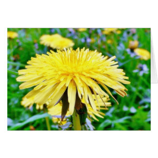 Dandelion On Field Card