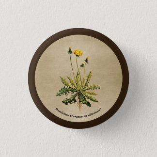 Dandelion On Old Paper 3 Cm Round Badge