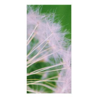 Dandelion Personalised Photo Card