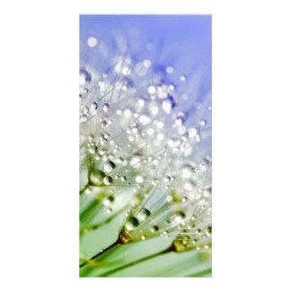 Dandelion Personalized Photo Card
