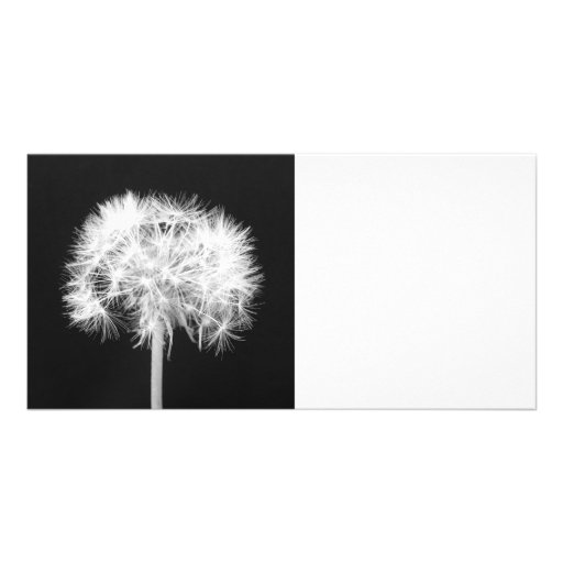 Dandelion Photo Card