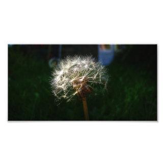 Dandelion Photo Art