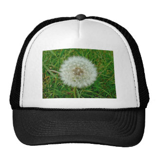 Dandelion Products Cap