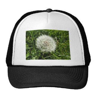 Dandelion Seed Design Cap
