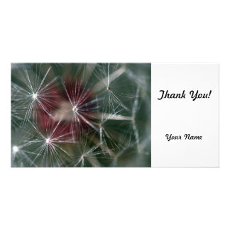 Dandelion Seed Head Photo Greeting Card
