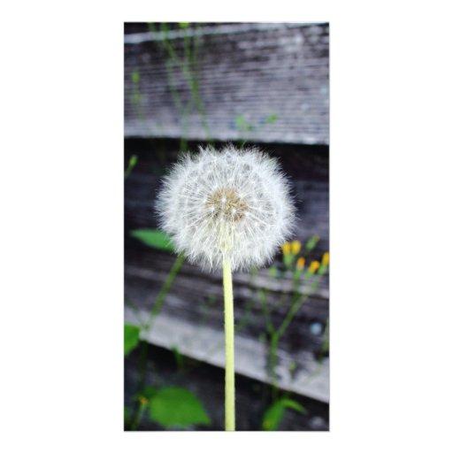 Dandelion Seeds Near Wood Planks. Photo Card Template