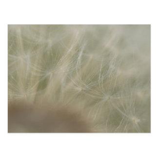 Dandelion Seeds Postcard
