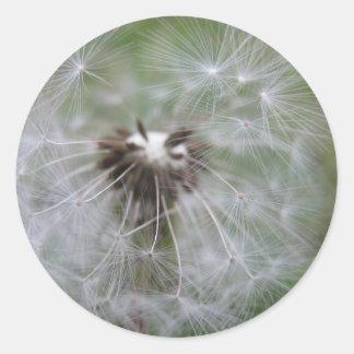 Dandelion sticker sheet
