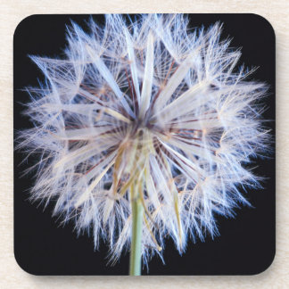 Dandelion (Taraxacum Officinale) Seed Head Beverage Coaster