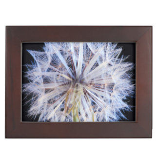 Dandelion (Taraxacum Officinale) Seed Head Keepsake Box